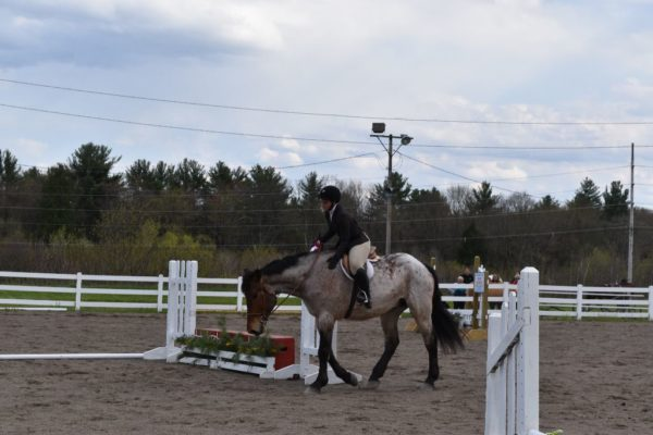 First-Horse-Show-1